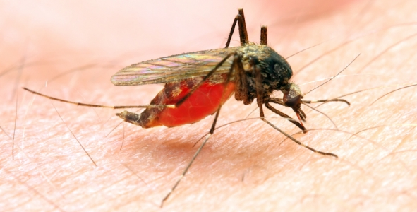 PHE updates malaria prevention guidelines for UK travellers